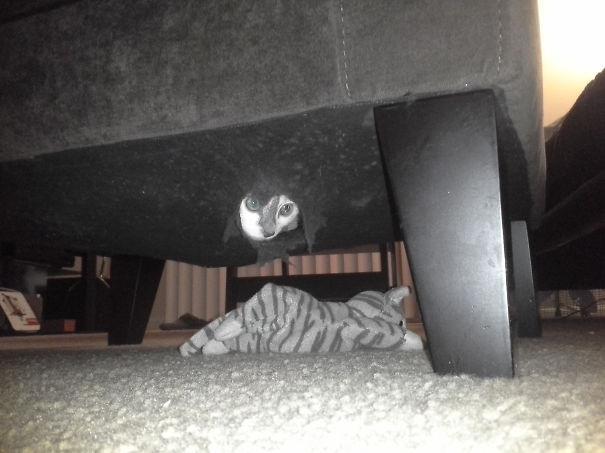 gatos ninjas (15)