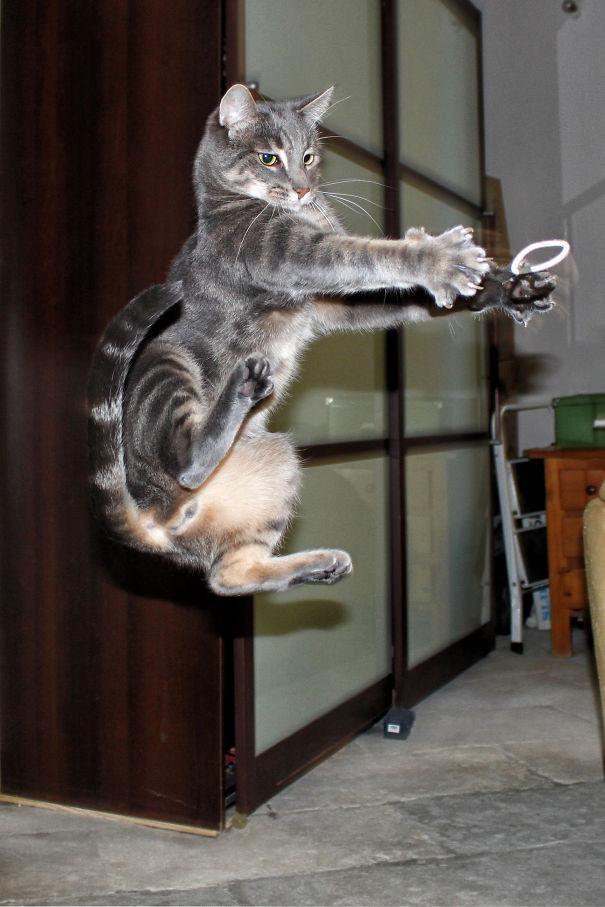 gatos ninjas (2)