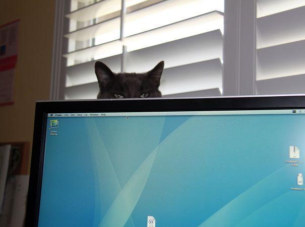 gatos ninjas (21)