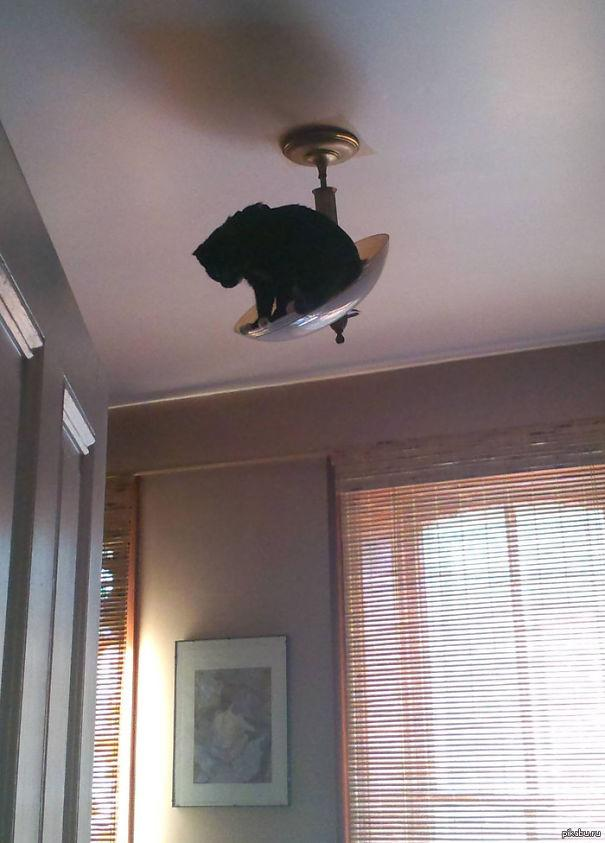gatos ninjas (22)