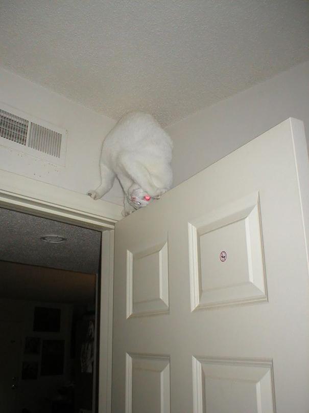 gatos ninjas (24)