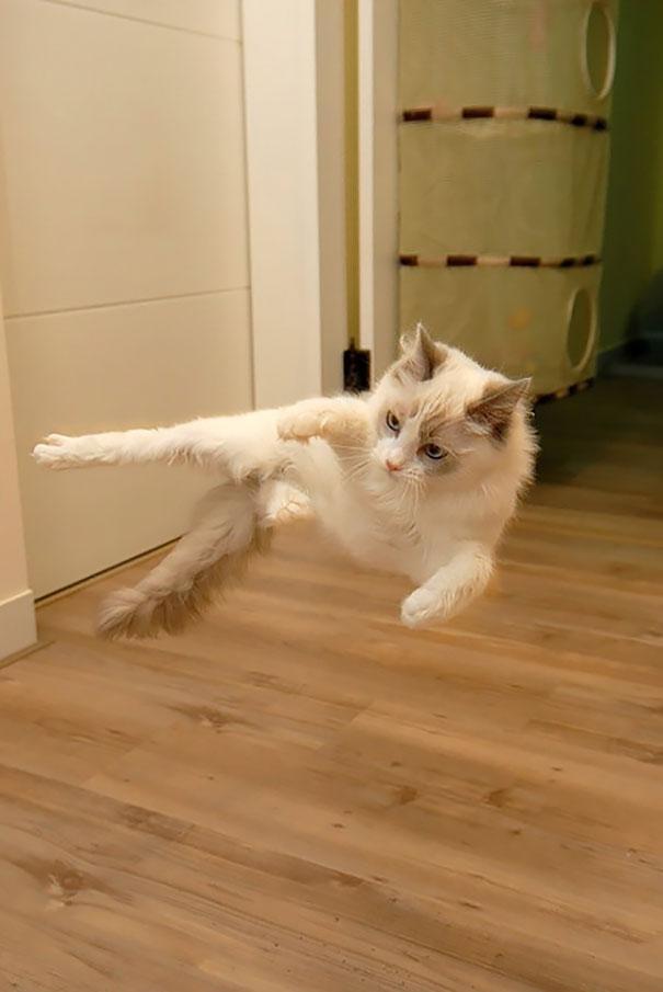 gatos ninjas (29)