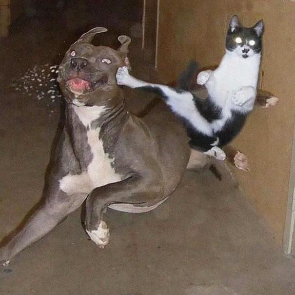 gatos ninjas (32)