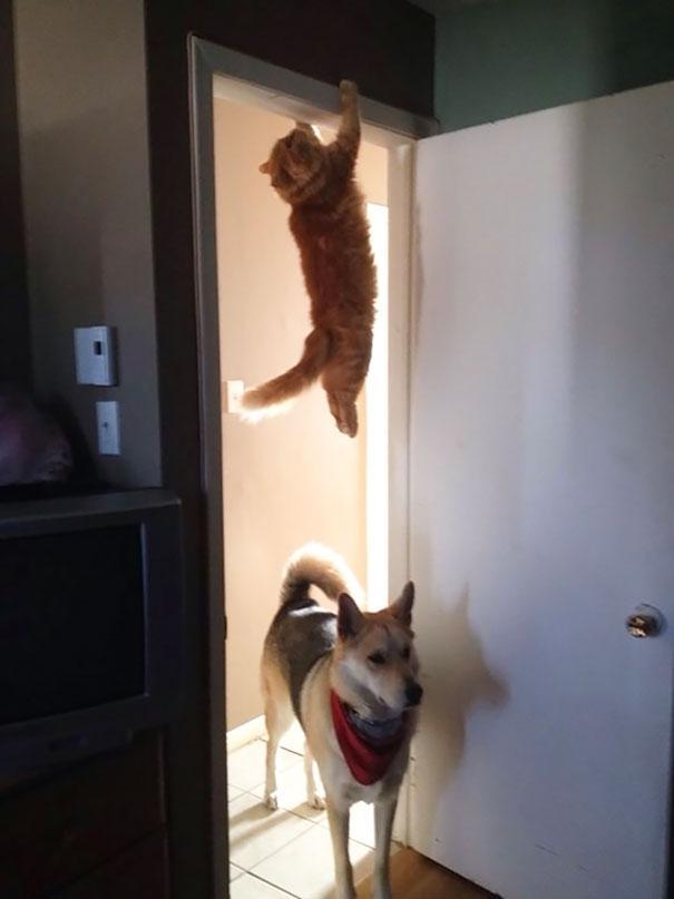 gatos ninjas (34)