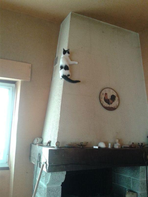 gatos ninjas (40)