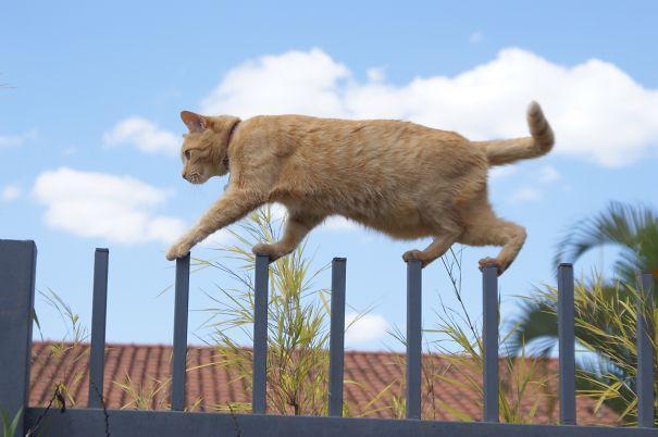 gatos ninjas (46)