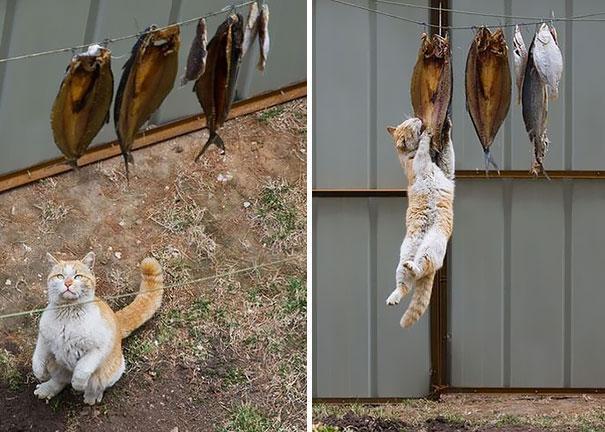 gatos ninjas (7)