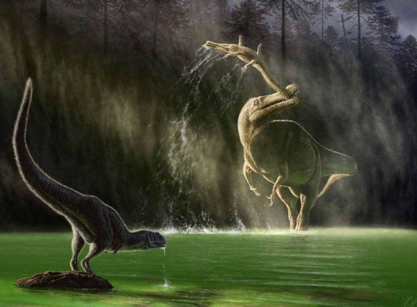 Uma cena do Cretáceo nigeriano descreve um jovem (e especulativamente portador de penas) abelisaurídeo chamado Kryptops perturbado enquanto bebe água pelo movimento causado por um suchomimo arrancando um jovem crocodilo imperador [espécie extinta de cocodrilomorfo neosuquio gigante] de seu habitat no rio.