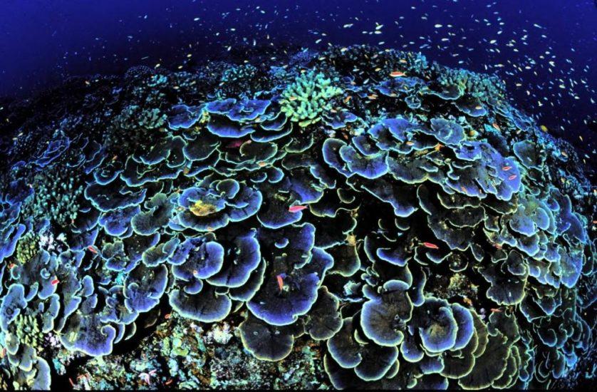 oceanos extincao