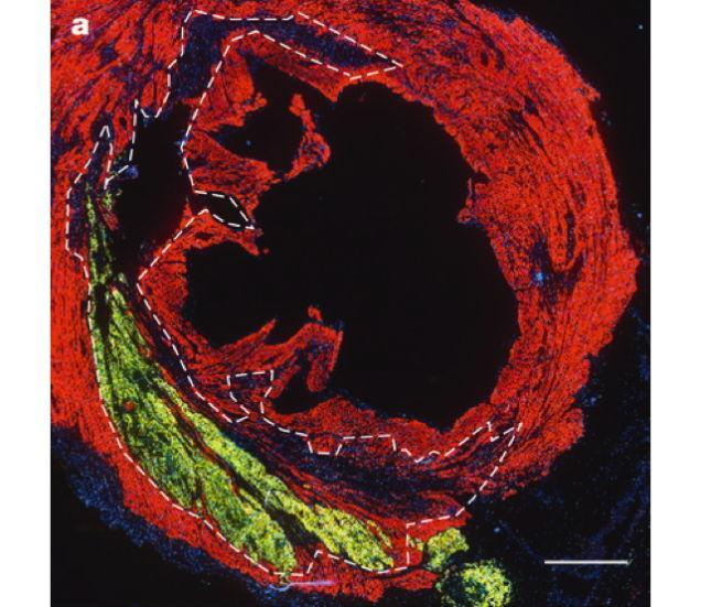 proteinas fluorescentes 6