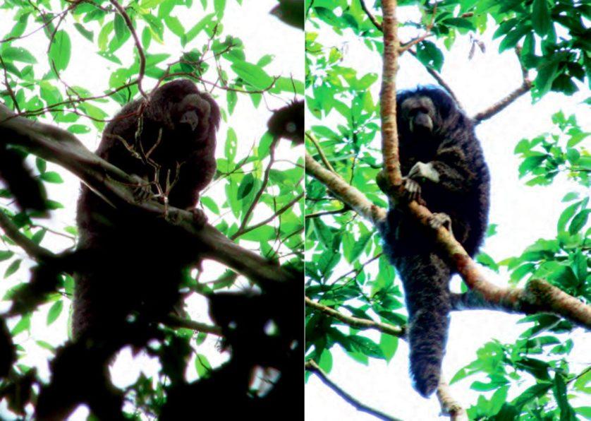 especies descobertas em 2014 11----
