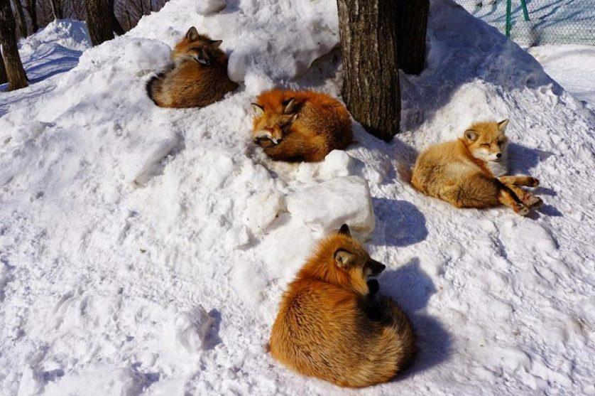 raposas zao village japao (10)