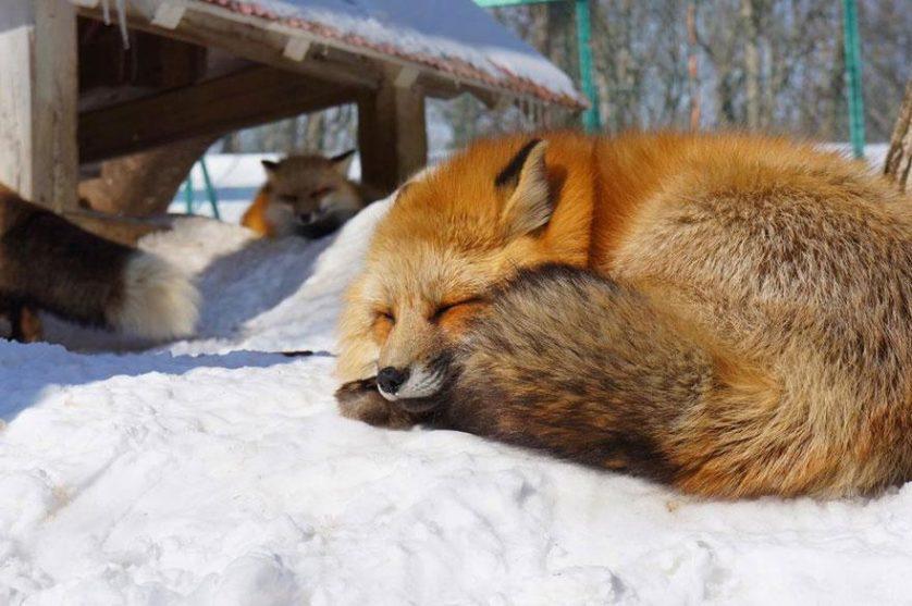 raposas zao village japao (11)