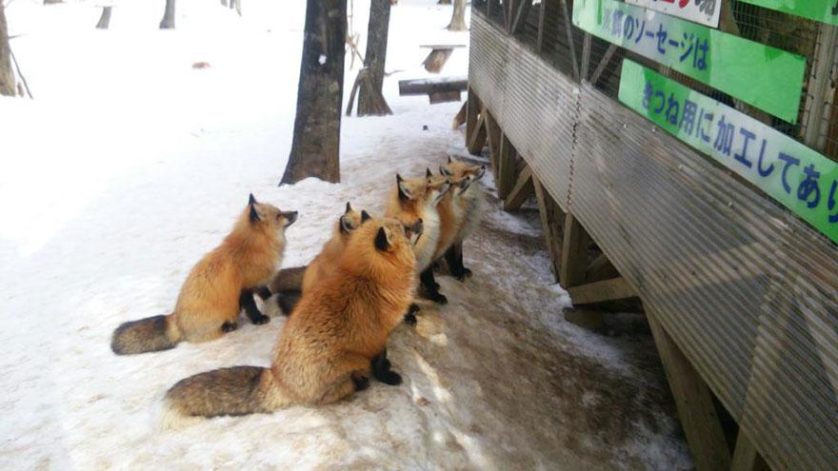 raposas zao village japao (12)