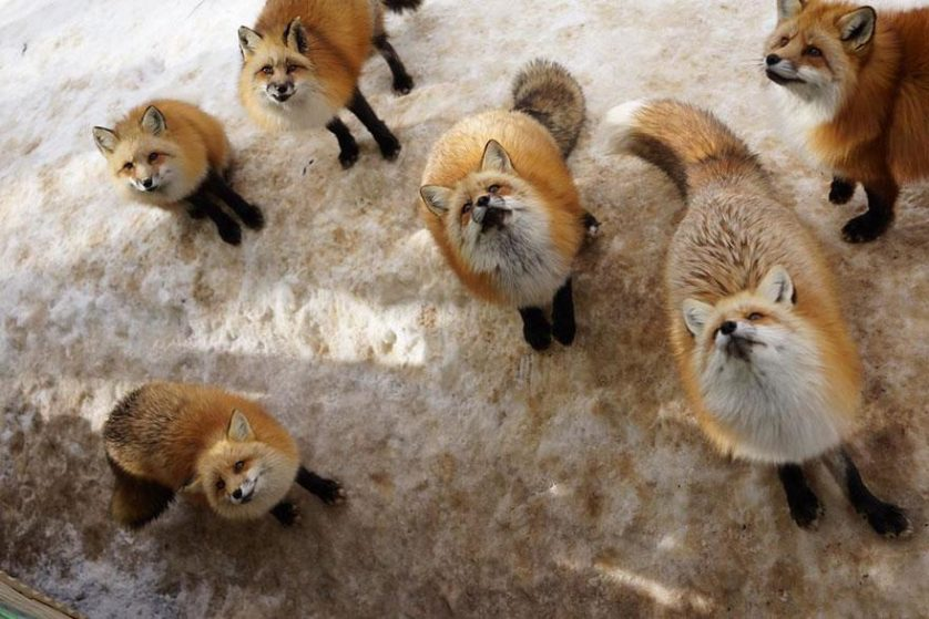 raposas zao village japao (13)