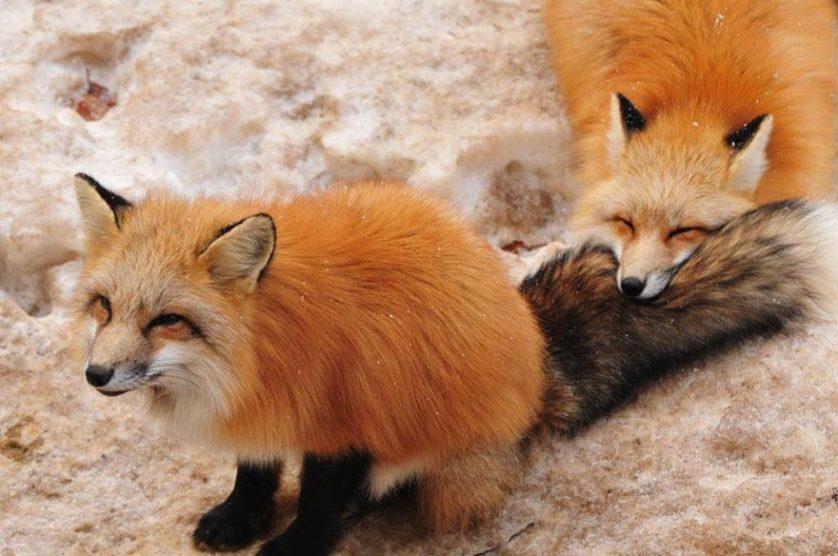 raposas zao village japao (15)