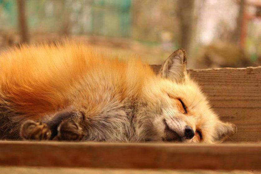 raposas zao village japao (16)