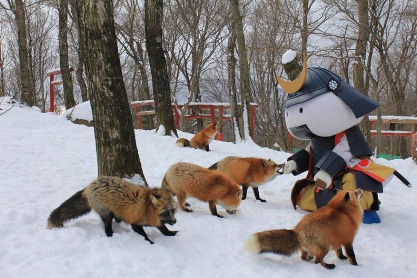 raposas zao village japao (17)