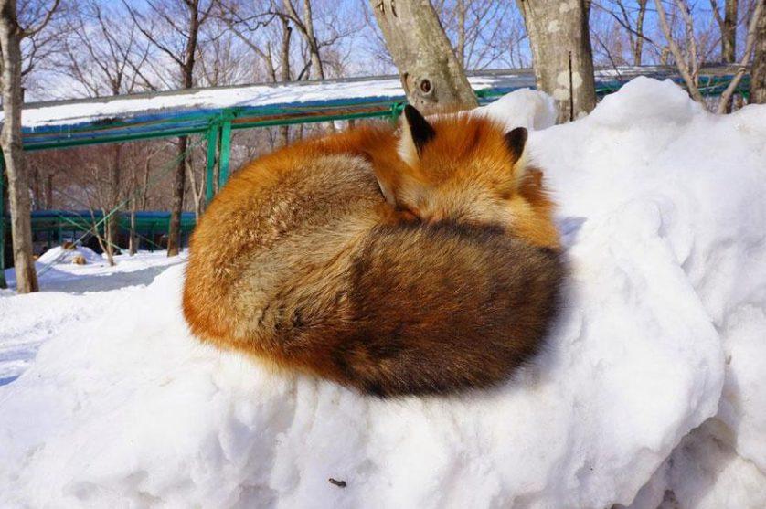 raposas zao village japao (20)