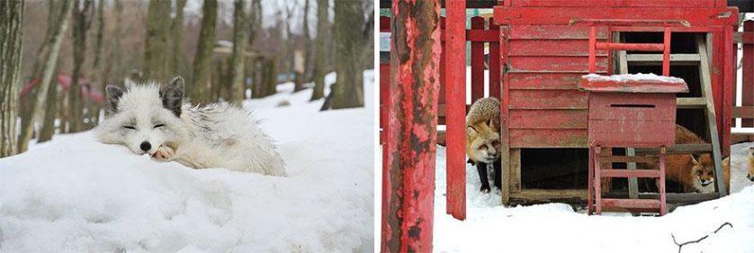 raposas zao village japao (22)
