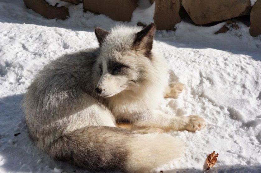 raposas zao village japao (24)