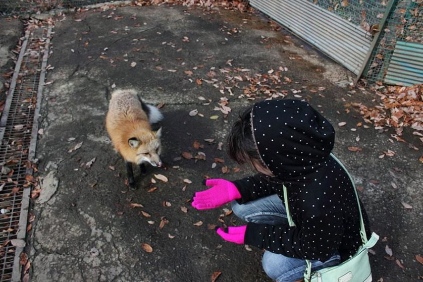 raposas zao village japao (5)