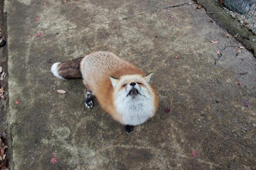 raposas zao village japao (6)