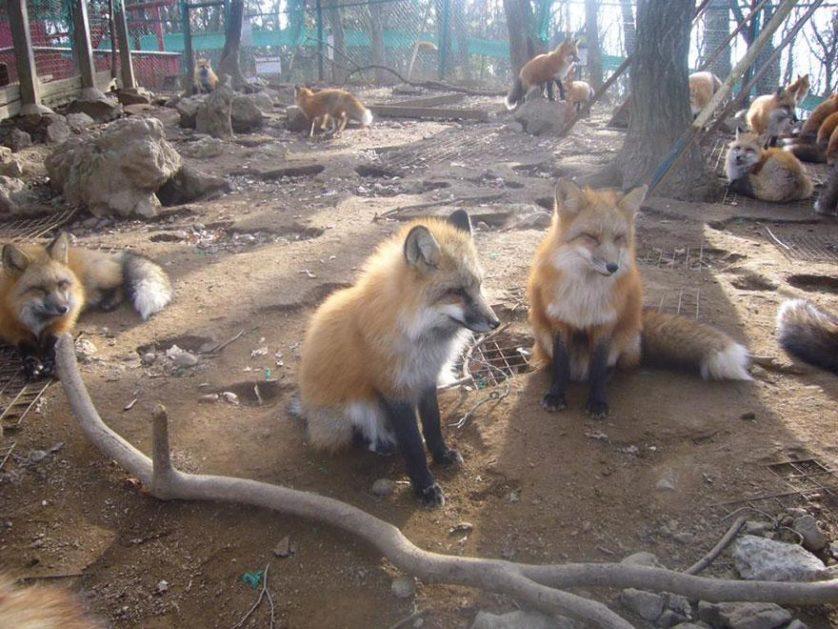 raposas zao village japao (7)