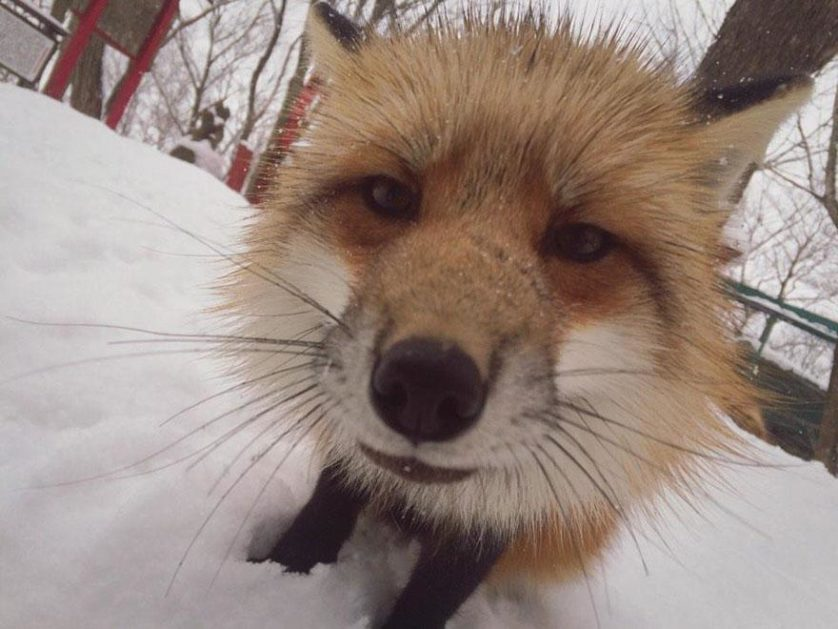 raposas zao village japao (8)