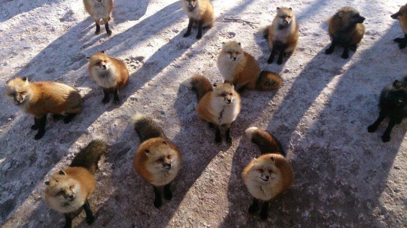 raposas zao village japao (9)