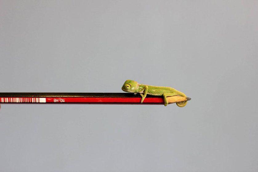 bebes camaleoes (6)