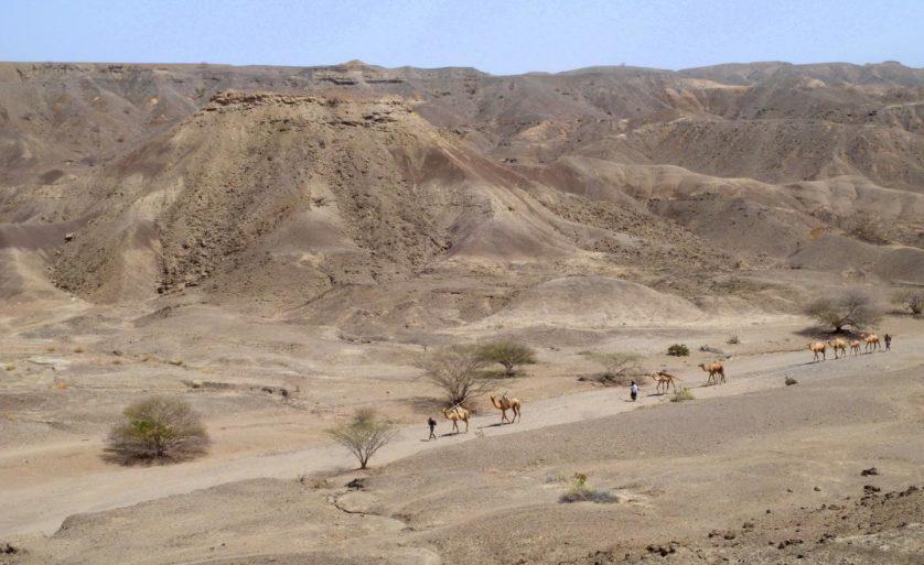 fossil ancestral humano antigo 3