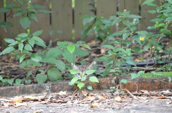 gatos camuflagem (1)