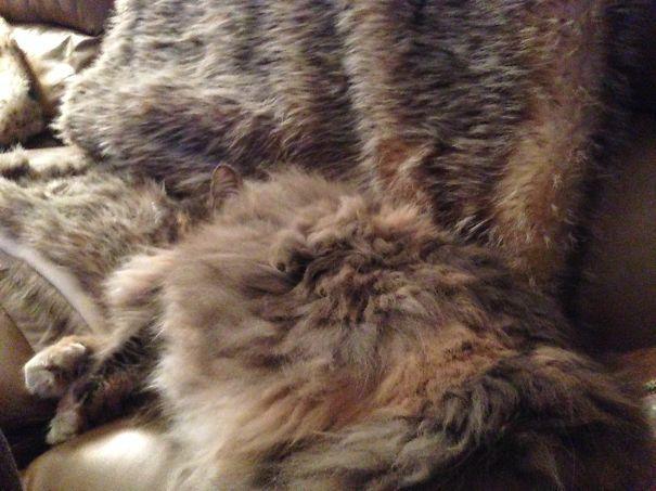 gatos camuflagem (15)