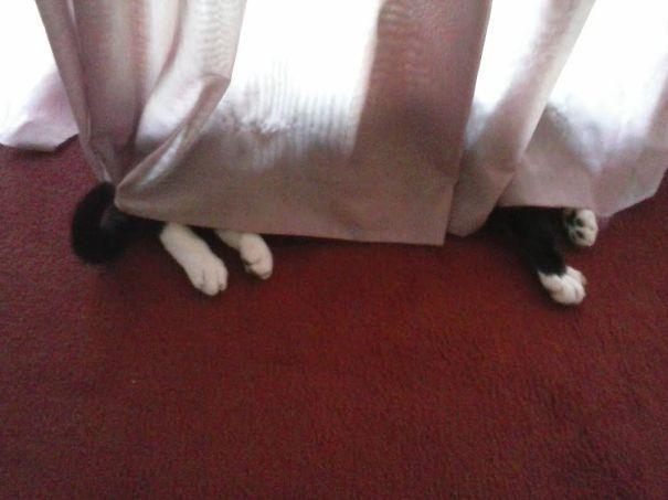 gatos camuflagem (19)