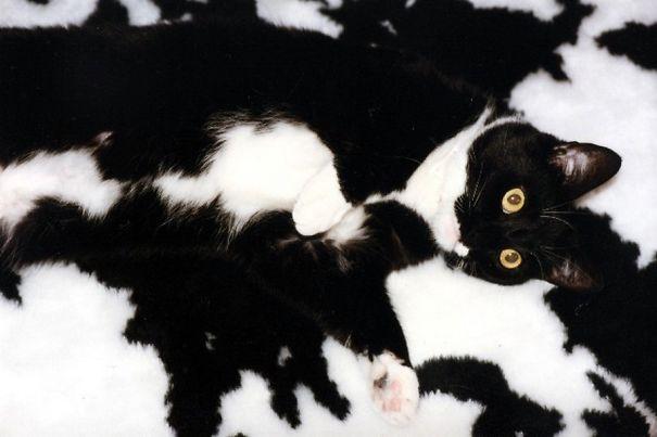 gatos camuflagem (22)