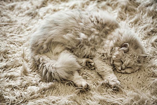 gatos camuflagem (23)