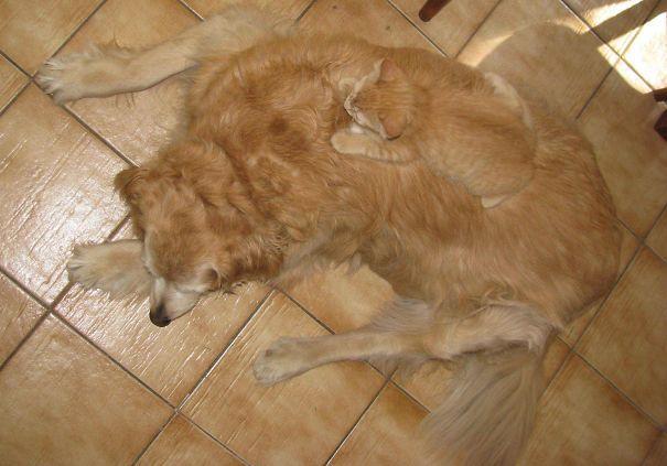 gatos camuflagem (24)