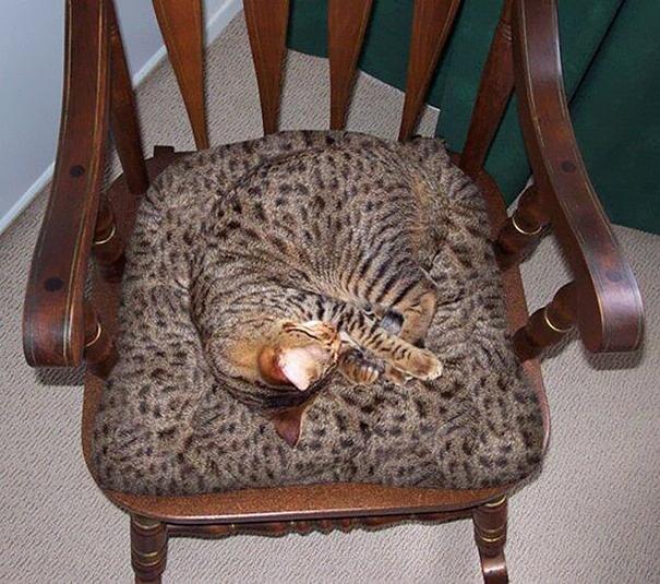 gatos camuflagem (25)