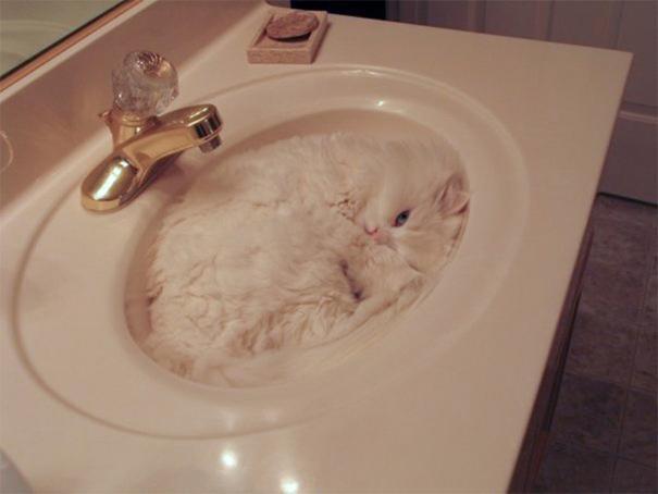 gatos camuflagem (26)