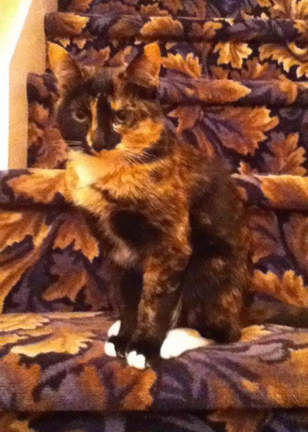 gatos camuflagem (27)