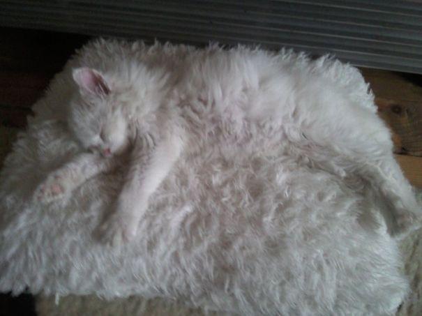 gatos camuflagem (29)