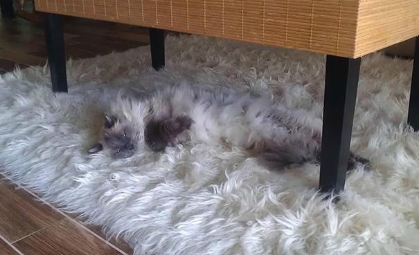 gatos camuflagem (30)