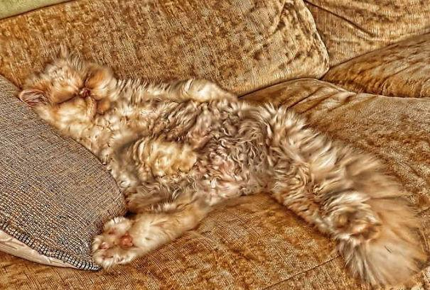 gatos camuflagem (33)