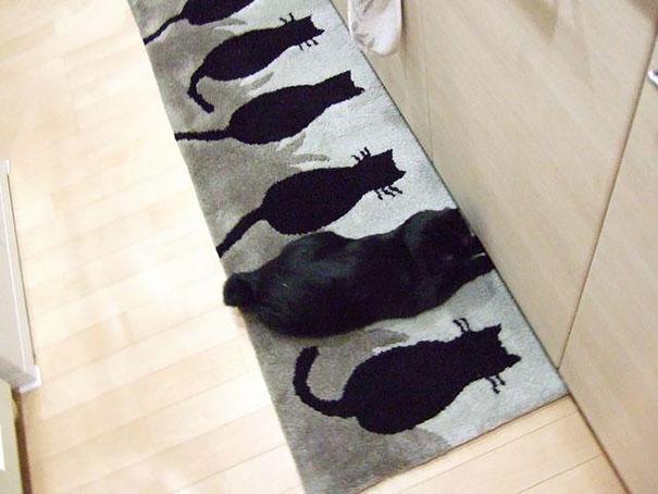 gatos camuflagem (34)