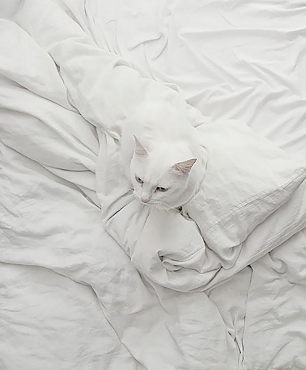 gatos camuflagem (44)