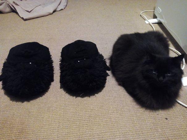 gatos camuflagem (45)