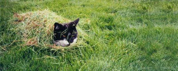 gatos camuflagem (5)