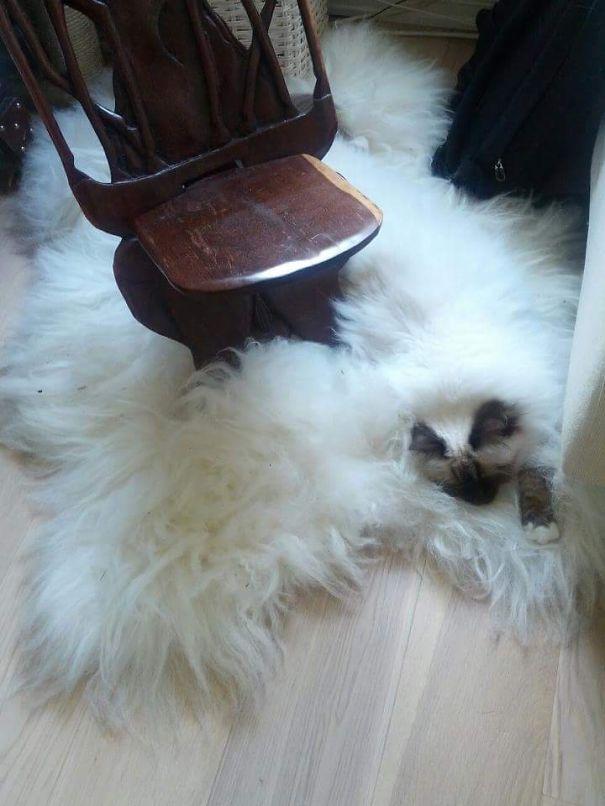 gatos camuflagem (8)