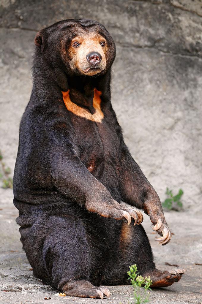 urso alien